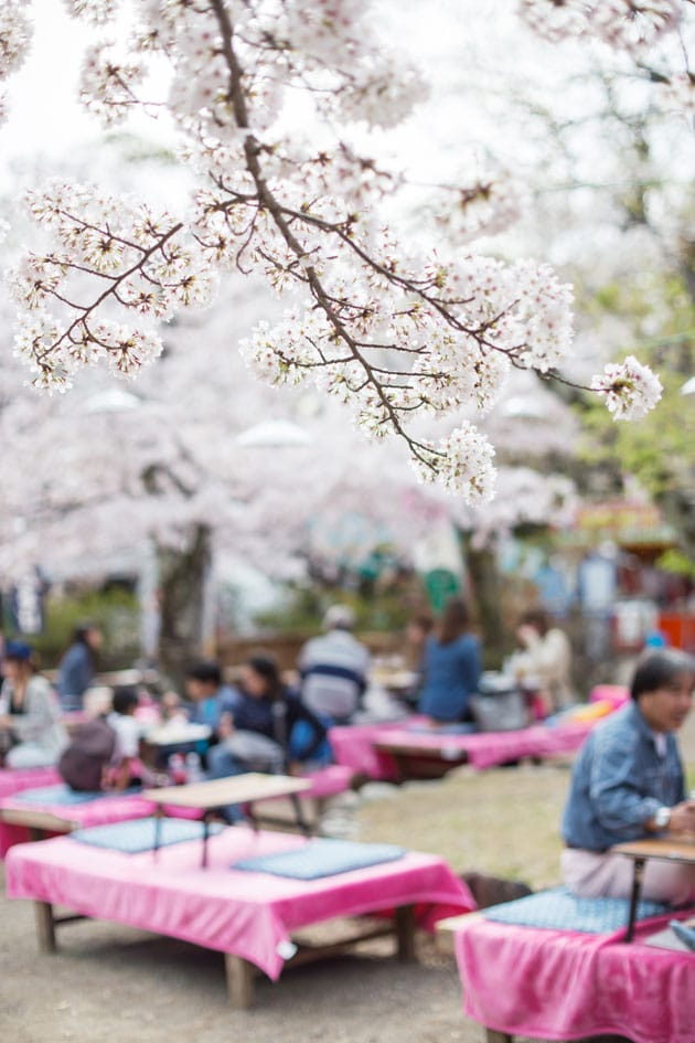 Cherry Blossom Party Picnic