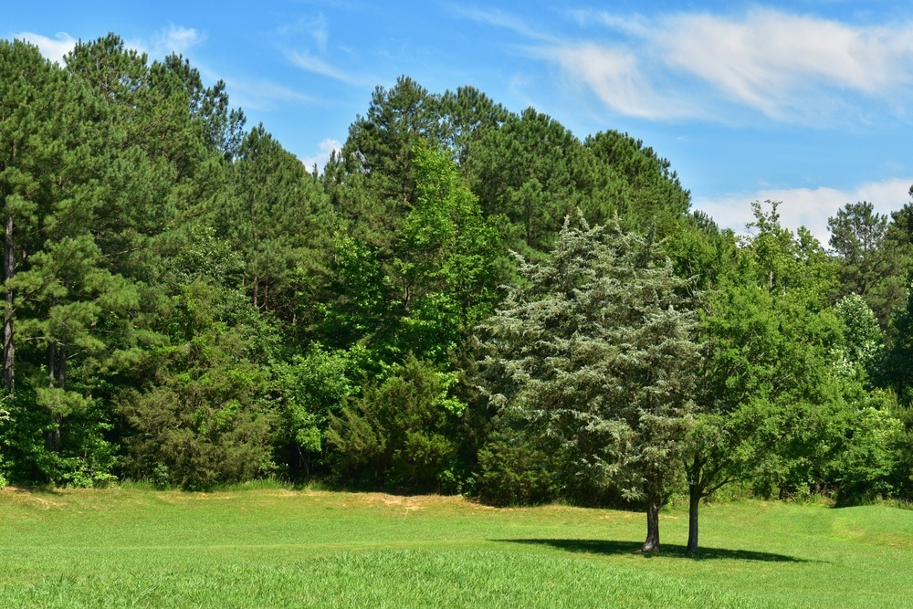 Green trees in a forest preserve with green grass